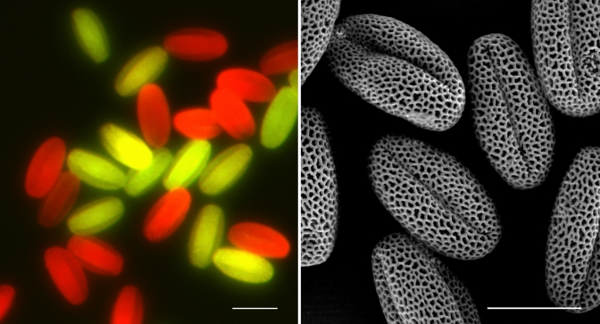 """Mutant seeds"" blossom in the pollen research field"